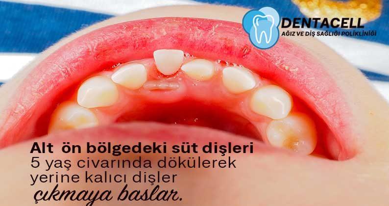 Süt Dişlerinin Ve Kalıcı Dişlerin Sürme Zamanları